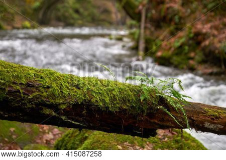 Mossy Log And Mountain Creek. Mountain Creek Water Flowing Behind A Mossy Log In The Pacific Northwe