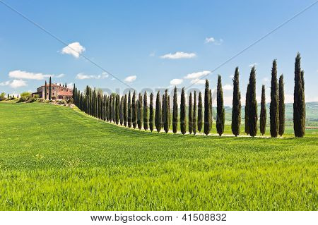 Classic View Of Tuscan Farmhouse, Green Field And Cypress Tree Rows