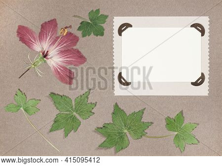 Page From An Old Photo Album. Flowers Hibiscus. Scrapbooking Element Decorated With Leaves, Flowers