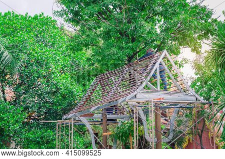 Welder And Painter Are Helping To Build A Gable Roof Structure Below A Large Mango Tree.