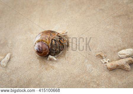 Hermit  Crab On Sand Beach.