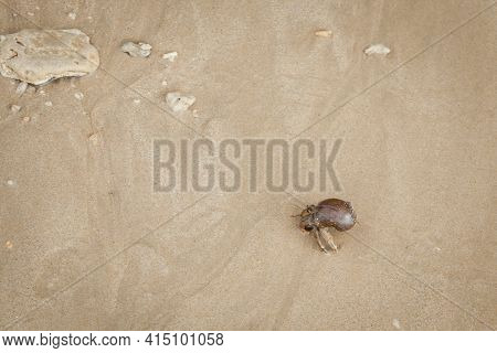 Hermit  Crab On Sand Beach In Andaman Sea.