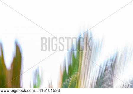 Botanical Motion Blur Cycad Plant Abstract On White.