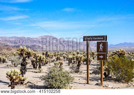 Joshua Tree Np, Ca, Usa - January 21, 2020: The Cholla Garden Trail
