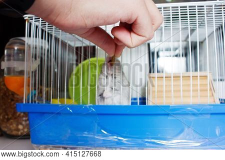 Sweet Hamster Who Eats His Treats.jungar Hamster In A Cage