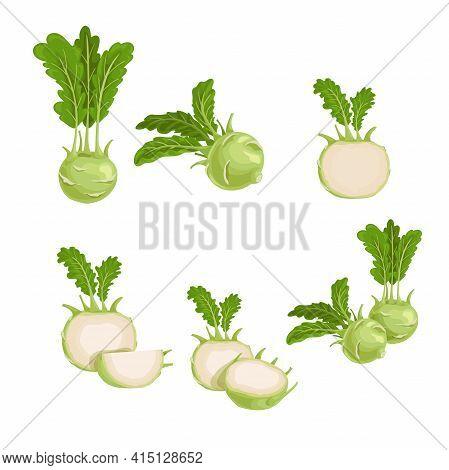 Kohlrabi Set. Whole, Halved And Quarter. Illustrations Collection Of Fresh Farm Vegetables. Eco Turn