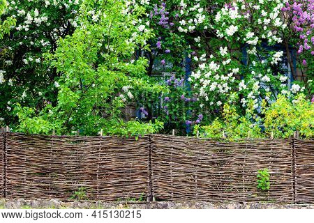 Wood Wicker Fence From Curved Wooden Twigs. Wooden Fence. Landscape Design Concept