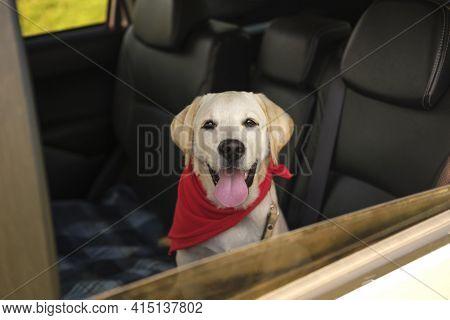 Beautiful Labrador Retriever Dog Car. High Quality And Resolution Beautiful Photo Concept