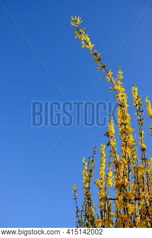 Yellow Flowers In Full Bloom On A Blue Backround