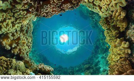 Scene Reef. Marine Life Sea World. Underwater Fish Reef Marine. Philippines.