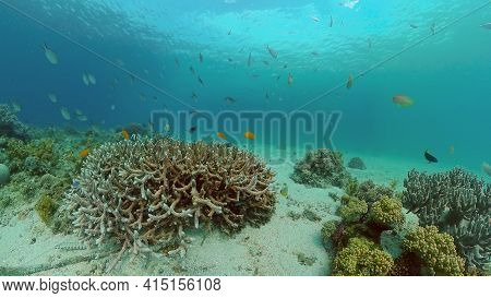 Underwater Tropical Reef View. Tropical Fish Reef Marine. Soft-hard Corals Seascape. Philippines.