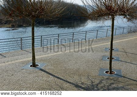 Seafront With Plane Trees Growing Out Of The Lattice In The Pavement. A Beige Concrete Staircase Ser