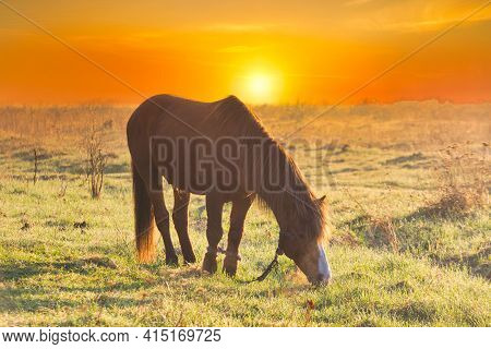 The Horse Is Grazing In The Fog In The Spring.