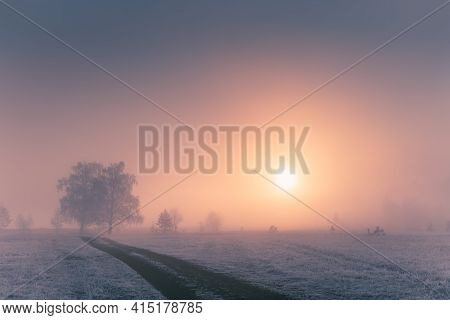 Misty Sunrise In The Winter Forest. Trees With Hoarfrost In The Foggy Morning. Beautiful Winter Land