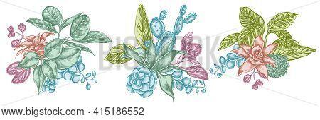 Flower Bouquet Of Pastel Ficus, Iresine, Kalanchoe, Calathea, Guzmania Cactus Stock Illustration