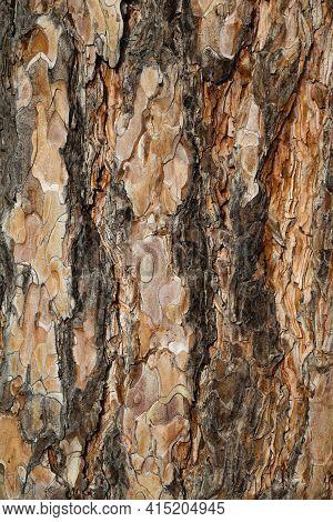 Natural Wood Bole Trunk Bark Surface Flat High Quality Texture