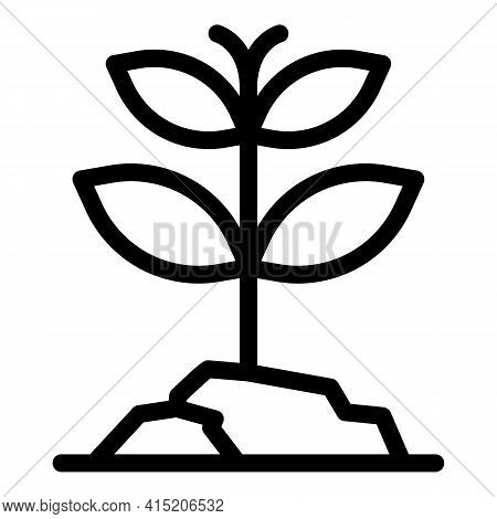 Herbal Plant Icon. Outline Herbal Plant Vector Icon For Web Design Isolated On White Background