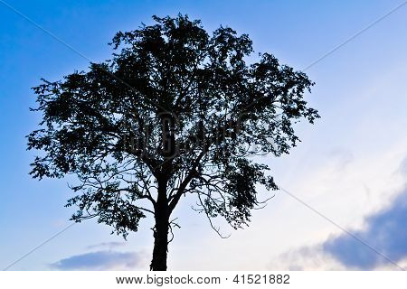 The Tree And Sky