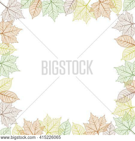 Maple Tree Leaf Frame.  Illustration. Autumn Colors Graphic Card Template Square Boarder.