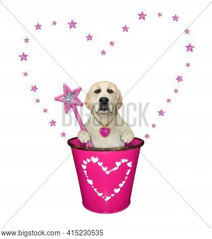 A Dog Labrador With A Magic Wand  Is In A Pink Pail. White Background. Isolated.