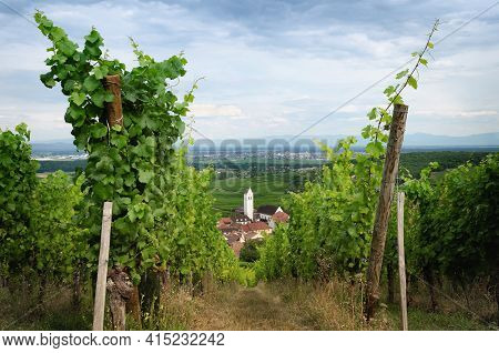 Summer View Between The Vines Of The Vineyard And The Bell Tower Of Katzenthal, Famous Winemaking Vi