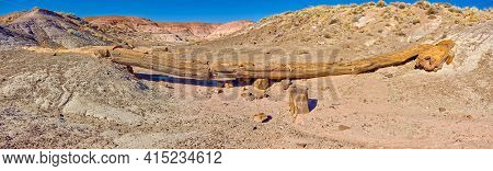 The Onyx Bridge In Petrified Forest National Park Arizona. It Is One Of The Few Petrified Trees In T