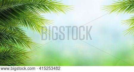 World Environment Day Concept: Palm Tree Leaves  On Blue Sky Background