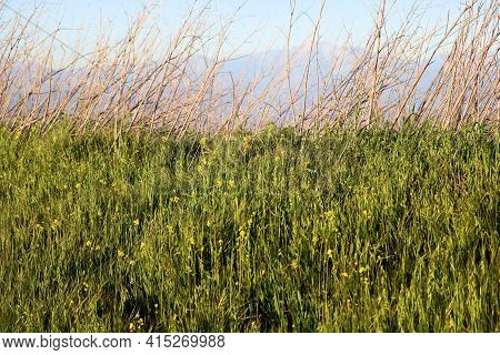 Windswept Grasslands And Spring Wildflowers On A Lush Plateau With The San Gabriel Mountains Beyond