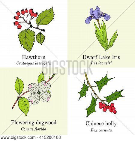 Set Of Edible And Medicinal Plants. Hand Drawn Botanical Vector Illustration