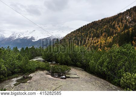 Forest In The Autumn Along The Way Of The Red Train Of The Bernina