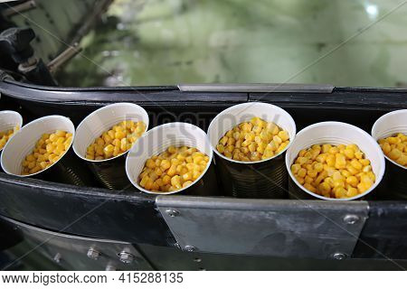 Canned Food Product Line. Fresh Corn In Jars On Conveyer Belt