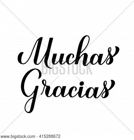 Thank You Very Much Calligraphy Hand Lettering In Spanish Language Isolated On White Background. Vec