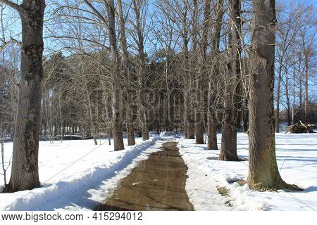 A Path With Puddles In The Forest In Early Spring Among The Snow In Sunny Weather