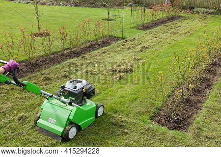 Woman Scarifying A Garden Lawn With A Scarifier. Scarification Of Turf, A Spring Garden Maintenance
