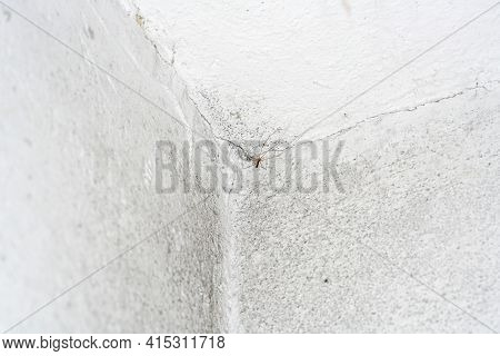 Moldy Stone Wall Through Damp Walls Structure Photographed In Daylight