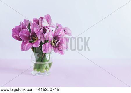 Tender Violet Tulips In A Vase On A Pastel Violet Background. Greeting Card For Women's Day. Place F