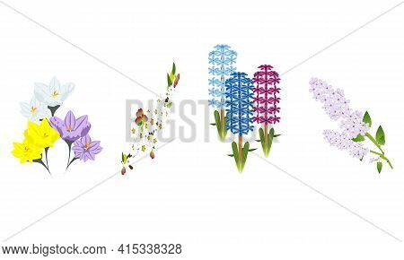 The Flowers Is Blooming In Spring-crocus,ornamental Apple Tree(crab-apple),hyacinth,lilac
