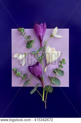 Violet And White Crocuses, Snowdrops With Green Eucalyptus Leaves And Branches On A Violet Paper Car