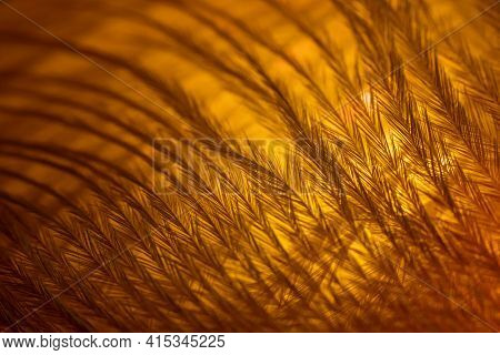 Closeup Of The Down Feather Of A Bird. The Bird's Feather Is Close, Fluff Like Seaweed Or Fairy Tree