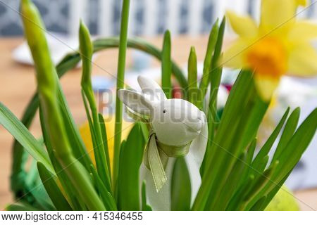 Daffodil flowers with Easter bunny