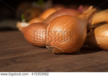 Large Yellow Unpeeled Onion On A Dark Wooden Background. The Unique Natural Antibiotic Of The Bulbou