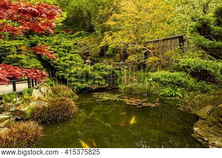 Relaxing Scene From A Koi  Fish Pond Inside A Decorative Japanese Garden With Beautiful Plants And M