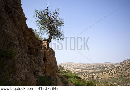 Image Features A Weird Shaped Bushy Tree On The Edge Of A Cliff. Its Roots Firmly Holds The Little A
