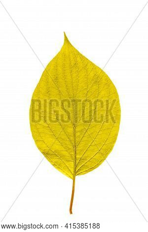 Yellow Leaf With Texture Isolated On White.