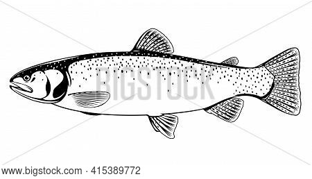 Cutthroat Trout Fish Black And White Illustration