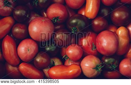 Background Of Different Sizes And Varieties Of Tomatoes. A Fruitful Year. Irregular Shaped Tomatoes