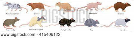 Mouse Vector Illustration On White Background. Isolated Cartoon Set Icon Animal. Vector Cartoon Set