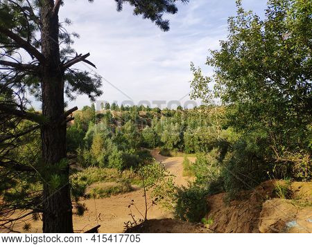 A Pine Tree On The Slope Of A Huge Abandoned Sand Quarry. Abandoned Sand Pit Overgrown With Trees.