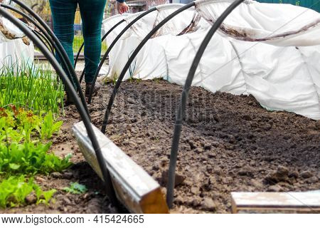 Defocus Woman Gardener Is Standing Near A Low Tunnel Greenhouse. The Farmer Looking On Crop And Harv