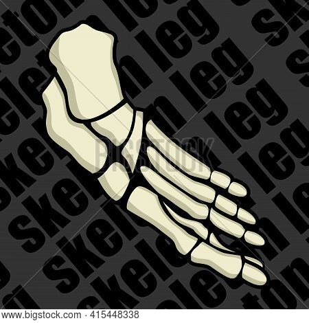 Image Of A Part Of A Human Skeleton. Anatomical Image. Foot Of The Skeleton. Vector Illustration.